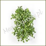 Mini Pothos Bush