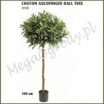 Kroton Goldfinger Ball Tree